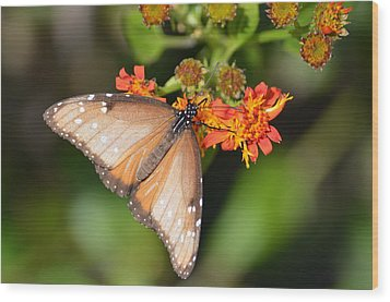 Wood Print featuring the photograph Butterfly On Mexican Flame by Debra Martz
