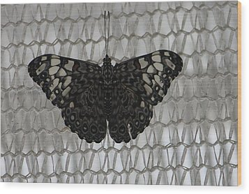 Wood Print featuring the photograph Butterfly On Net by Bill Woodstock