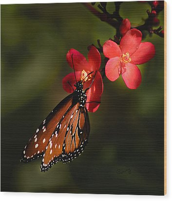 Butterfly On Red Blossom Wood Print by Penny Lisowski