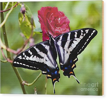 Butterfly On Rose Wood Print by Chuck Flewelling