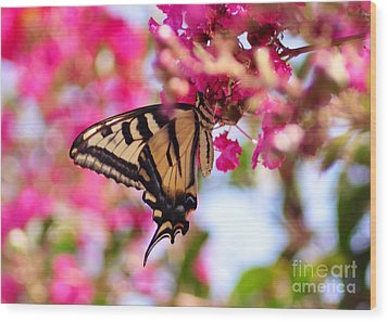 Butterfly On The Crepe Myrtle. Wood Print