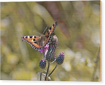 Butterfly On Tistle Sep Wood Print