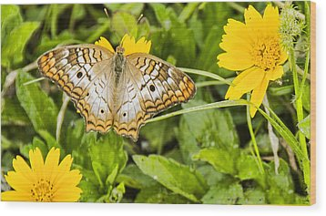 Butterfly On Yellow Flower Wood Print by Don Durfee