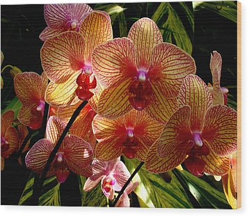 Wood Print featuring the photograph Butterfly Orchids by Rodney Lee Williams
