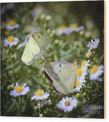 Wood Print featuring the photograph Butterfly Moments  by Kerri Farley