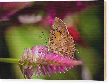 Butterfly Pink Sparkle  Wood Print by Isabel Laurent
