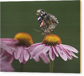Wood Print featuring the photograph Butterfly Red Admiral On Echinacea by Peter v Quenter