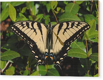 Wood Print featuring the photograph Butterfly by Robert  Moss