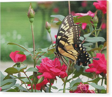 Wood Print featuring the photograph Butterfly Rose by Greg Simmons