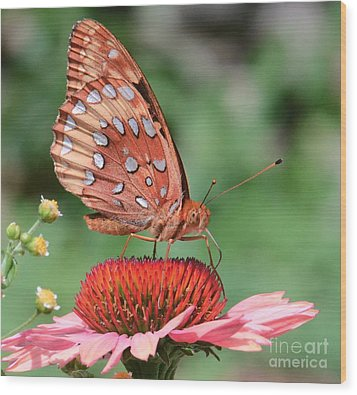 Butterfly Sipping A Coneflower Wood Print