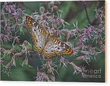 Wood Print featuring the photograph Butterfly Soft Landing by Thomas Woolworth