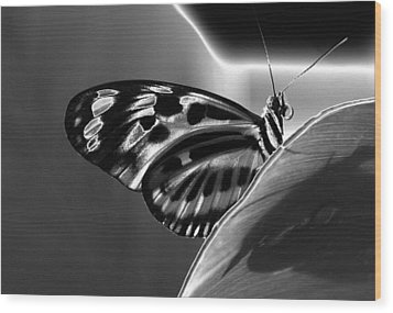 Butterfly Solarized Wood Print by Ron White