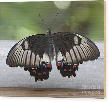 Butterfly Wood Print by Steven Ralser
