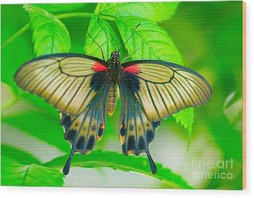 Butterfly Study #0064 Wood Print by Floyd Menezes