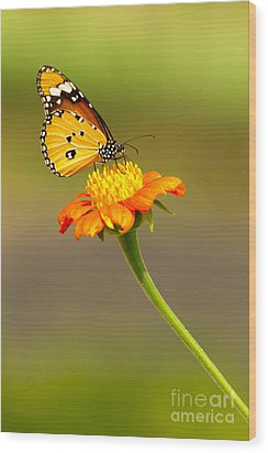 Butterfly Wood Print by Tosporn Preede