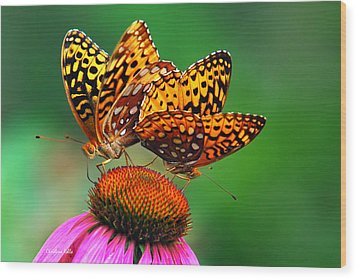 Butterfly Twins Wood Print by Christina Rollo