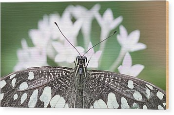 Butterfly View Wood Print