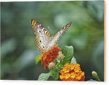 Butterfly Wings Of Sun 2 Wood Print by Thomas Woolworth