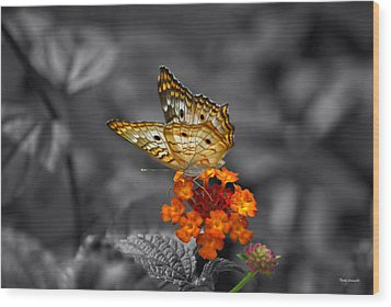 Butterfly Wings Of Sun Light Selective Coloring Black And White Digital Art Wood Print by Thomas Woolworth