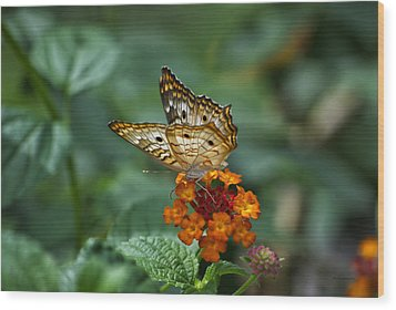 Wood Print featuring the photograph Butterfly Wings Of Sun Light by Thomas Woolworth