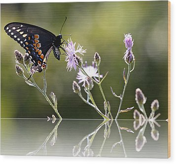 Butterfly With Reflection Wood Print by Eleanor Abramson
