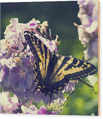 Wood Print featuring the photograph Butterfly by Yulia Kazansky