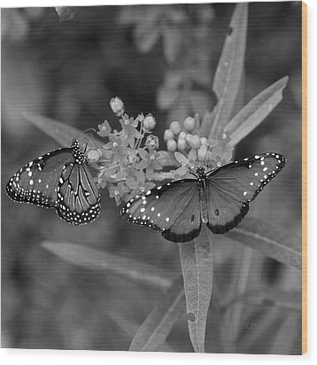 Butterflys Wood Print by Joseph G Holland