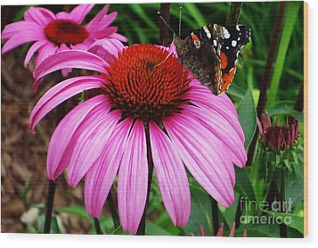 Butterly On Flower Wood Print by Claudette Bujold-Poirier