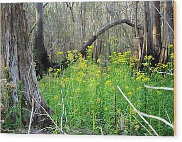 Butterweed Florida Wildflower Wood Print by Debra Forand