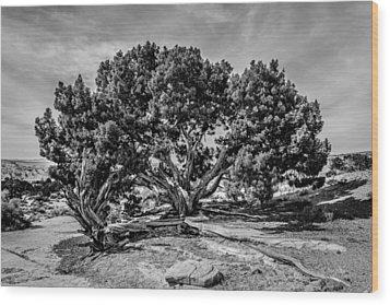 Bw Limber Pine Wood Print