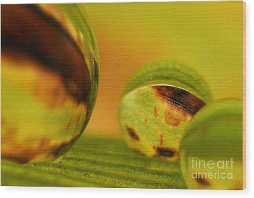 C Ribet Orbscape 0841 Wood Print