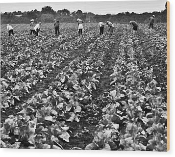 Wood Print featuring the photograph Cabbage Farming by Ricky L Jones