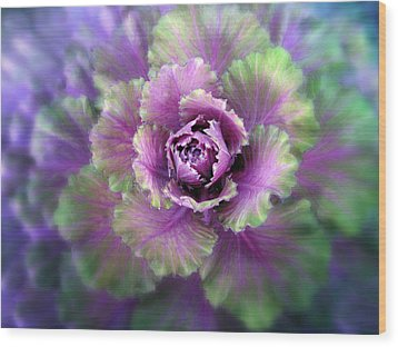 Cabbage Flower Wood Print by Jessica Jenney
