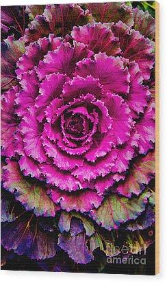 Cabbage Wood Print by Jon Burch Photography