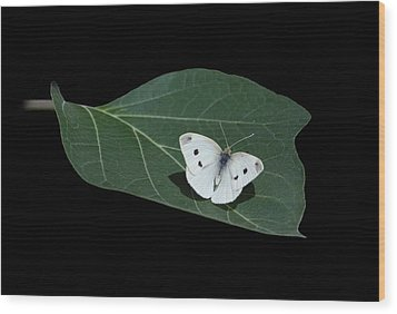 Cabbage White Butterfly Wood Print by Angie Vogel