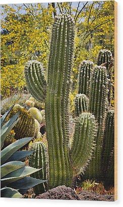 Cacti Habitat Wood Print by Kelley King