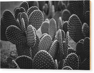 Cactus 5252 Wood Print by Timothy Bischoff