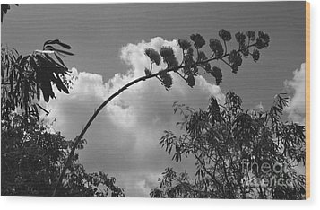 Wood Print featuring the photograph Cactus And Cloud by Kenny Glotfelty