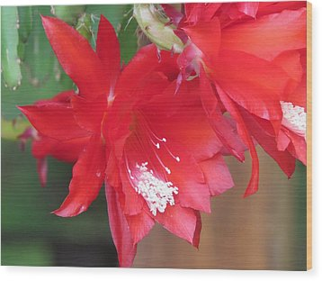 Cactus Blooming Wood Print by Diane Mitchell