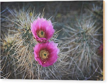 Cactus Blossoms Wood Print