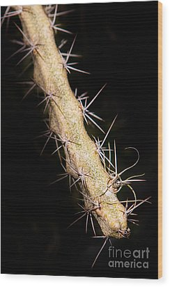 Cactus Branch Wood Print