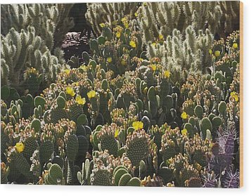 Cactus Carpet Wood Print by David Rizzo