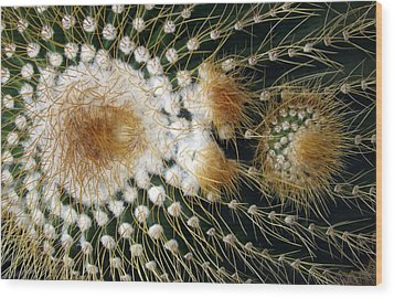 Cactus Close-up Wood Print by Joyce  Wasser