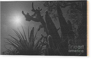 Wood Print featuring the photograph Cactus Family - 2 by Kenny Glotfelty