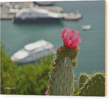 Cactus Flower Above The Port Of Nice Wood Print by Allen Sheffield
