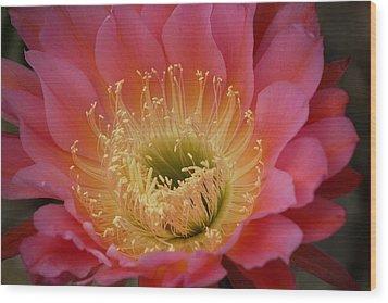 Cactus Flower Wood Print by Bonita Hensley