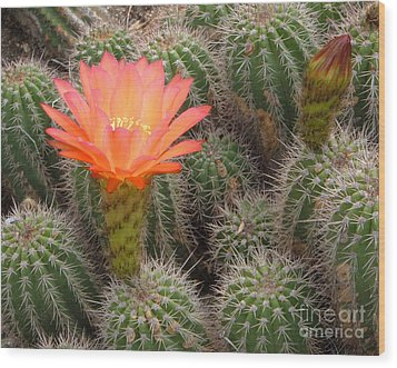 Wood Print featuring the photograph Cactus Flower by Cheryl Del Toro