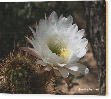Cactus Flower Full Bloom Wood Print