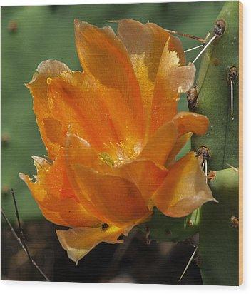 Cactus Flower In Orange Wood Print