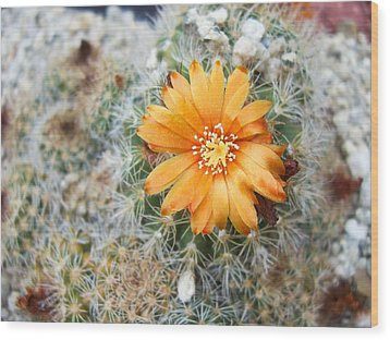Cactus Flower Wood Print by Marina Oliveira